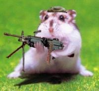 Hamster's Foto